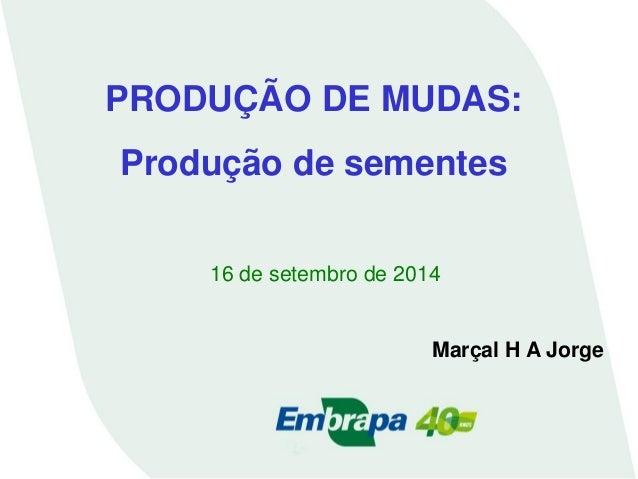 PRODUÇÃO DE MUDAS:  Produção de sementes  16 de setembro de 2014  Marçal H A Jorge