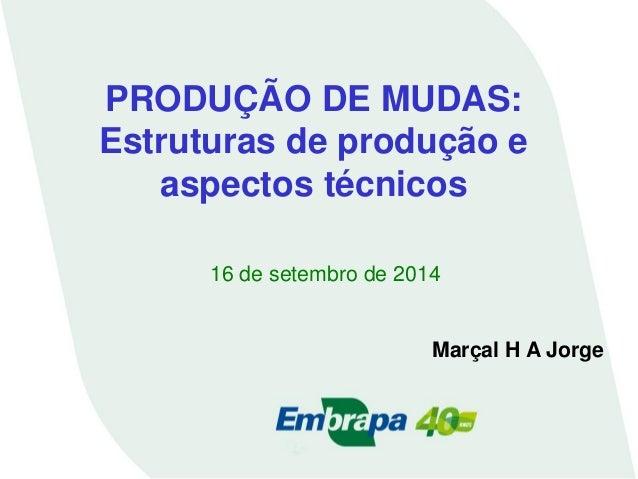 PRODUÇÃO DE MUDAS: Estruturas de produção e aspectos técnicos  16 de setembro de 2014  Marçal H A Jorge