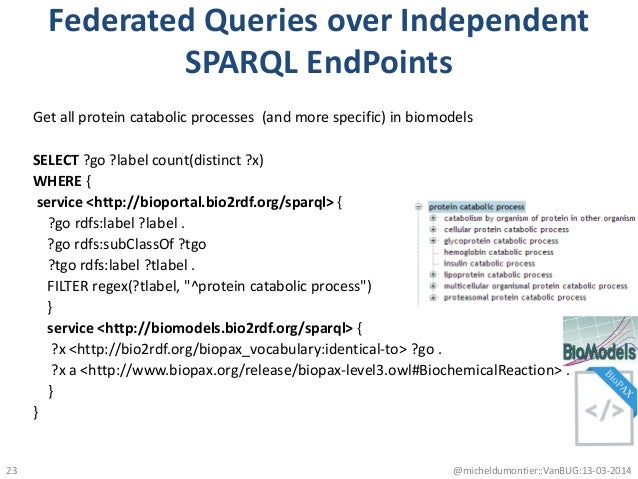 Federated Queries over Independent SPARQL EndPoints Get all protein catabolic processes (and more specific) in biomodels S...