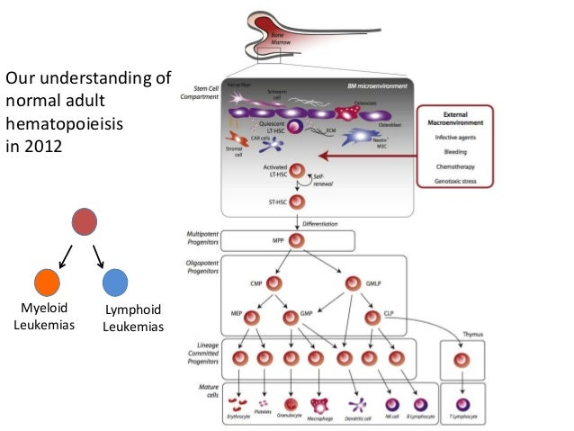 leukemia an overview Acute promyelocytic leukemia (apl), once described as the form of leukemia with the highest mortality, is now the most potentially curable subtype of adult acute myeloid leukemia.