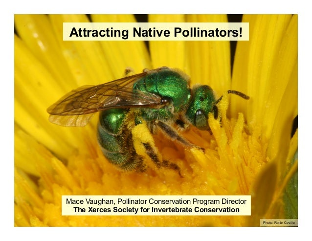 Mace Vaughan, Pollinator Conservation Program Director The Xerces Society for Invertebrate Conservation Attracting Native ...