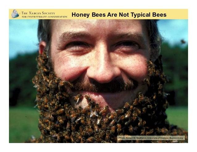 North America: 4,000 species Oregon: 600-800 species? Bee Diversity Photo: Mace Vaughan