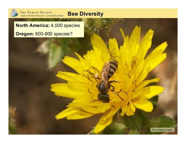 Photo: Stephen L. Buchmann Bee Diversity
