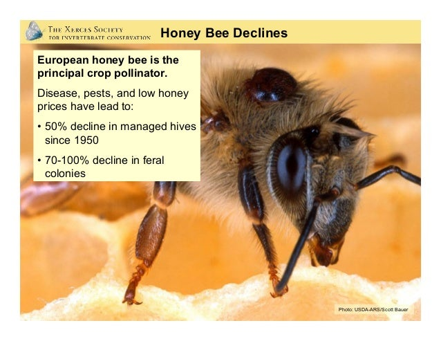 Photo: Eric Mader, (Xerces Society) Annual hive losses… Before CCD (1995-2006): 15% - 22% per year After CCD (2006-today):...