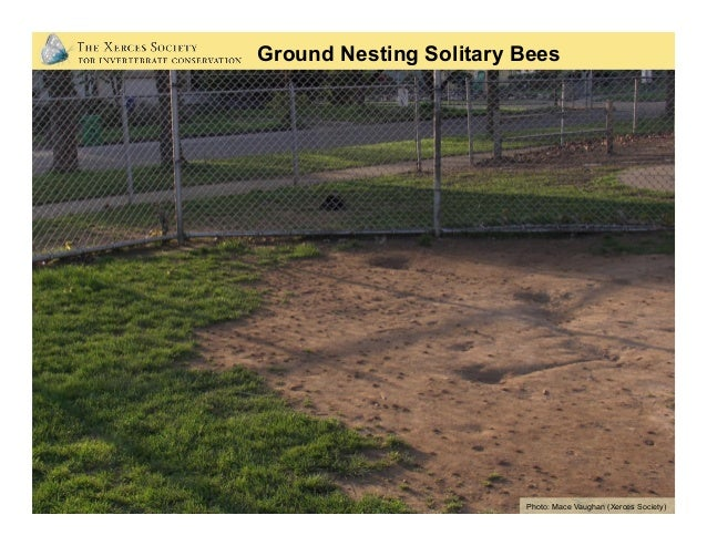 Retain or create bare soil: • Keep areas of bare ground • Maximize untilled areas • Clear away some plants from well dr...
