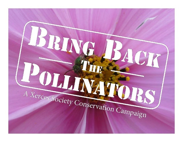 Bring Back the Pollinators To bring back the pollinators, I will: • Protect and provide bee nests and caterpillar host pl...