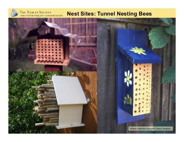 Bombus vagans on clover Bumble Bees (Social) Photos: Elaine Evans, Nancy Adamson 45 species in U.S. • Social colonies fou...
