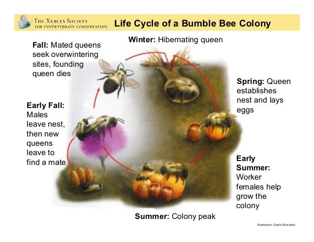 Bring Back the Pollinators To bring back the pollinators, I will: • Protect and provide bee nests. • Grow a variety of p...