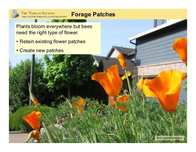 Photos: Matthew Shepherd; Berry Botanic Garde,n Mace Vaughan Plant Selection: • Abundant pollen and nectar • Preferred b...