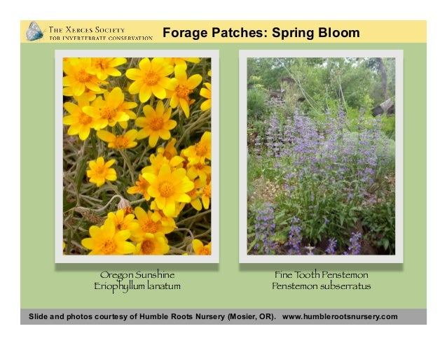 Slide and photos courtesy of Humble Roots Nursery (Mosier, OR). www.humblerootsnursery.com Forage Patches: Spring Bloom Ca...