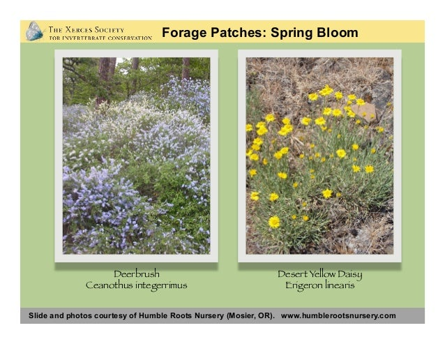 Slide and photos courtesy of Humble Roots Nursery (Mosier, OR). www.humblerootsnursery.com Forage Patches: Spring Early Su...