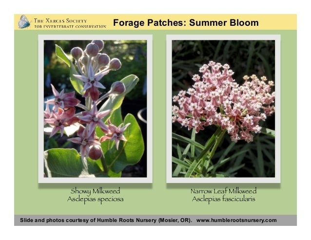 Slide and photos courtesy of Humble Roots Nursery (Mosier, OR). www.humblerootsnursery.com Forage Patches: Summer Bloom Fi...