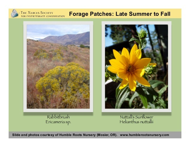 Photos: Matthew Shepherd Forage Patches: Garden Plants Photos: Matthew Shepherd