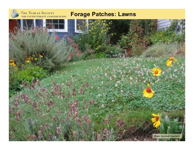 Forage Patches: Urban Meadows