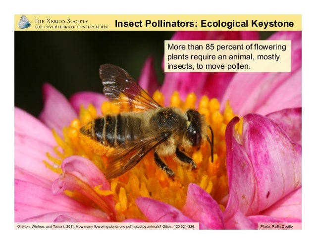 Benefits to Other Wildlife: • Pollinator-produced fruits and seeds comprise 25% of bird and mammal diets • Pollinators a...