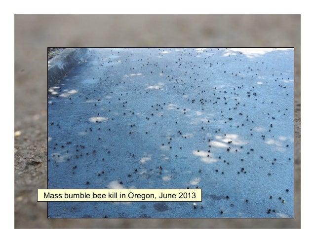 Mass bumble bee kill in Oregon, June 2013