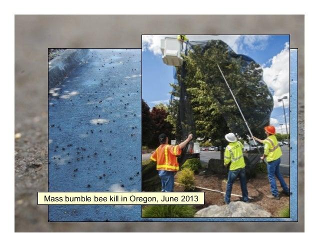 Mass bumble bee kill in Oregon, June 2013 Photo: Mace Vaughan (Xerces Society) Pesticides Kill Bees