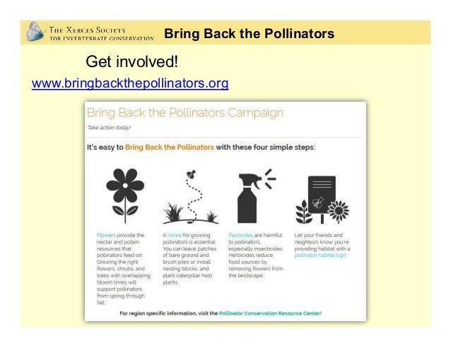Bring Back the Pollinators Get involved! www.bringbackthepollinators.org