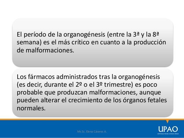 Ms.Sc. Elena Cáceres A. El período de la organogénesis (entre la 3ª y la 8ª semana) es el más crítico en cuanto a la produ...