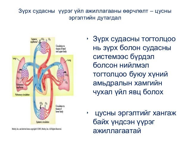 Зүрх судасны үүрэг үйл ажиллагааны өөрчлөлт – цусны эргэлтийн дутагдал • Зүрх судасны тогтолцоо нь зүрх болон судасны сист...