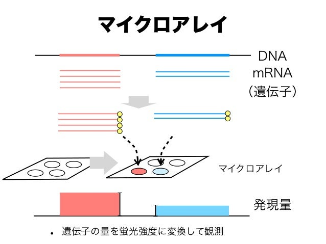 マイクロアレイ • 遺伝子の量を蛍光強度に変換して観測 マイクロアレイ DNA mRNA (遺伝子) 発現量