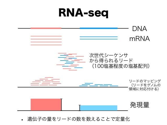 RNA-seq • 遺伝子の量をリードの数を数えることで定量化 DNA mRNA 次世代シーケンサ から得られるリード (100塩基程度の塩基配列) リードのマッピング (リードをゲノムの 領域に対応付ける) 発現量