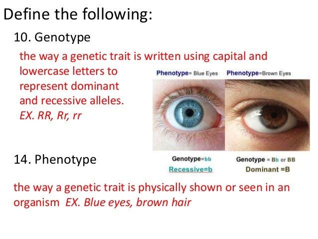 genotype definition - photo #20