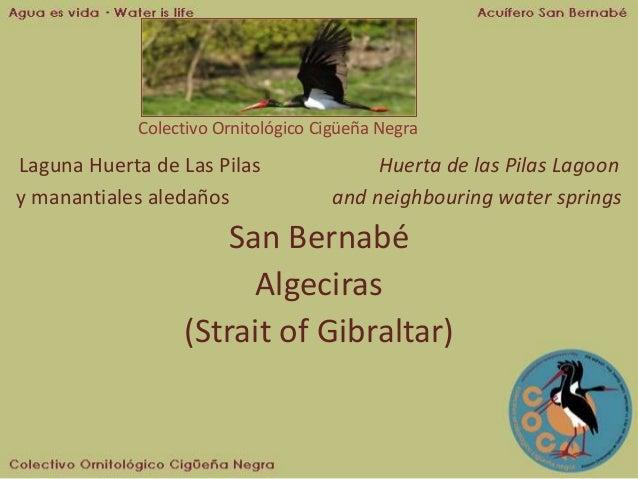 Colectivo Ornitológico Cigüeña Negra Laguna Huerta de Las Pilas Huerta de las Pilas Lagoon y manantiales aledaños and neig...