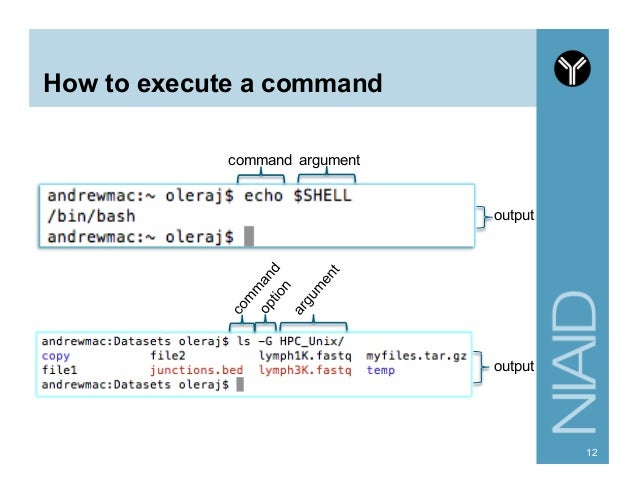 how to run a command from perl script