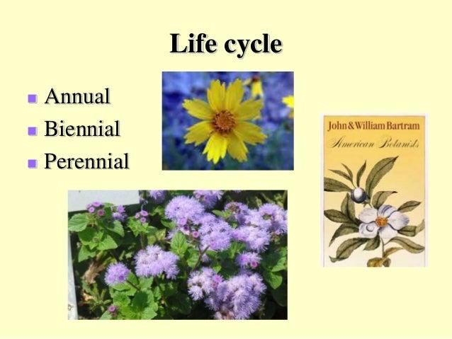 2017 Beauregard Parish Master Gardener Class: Botany by ...