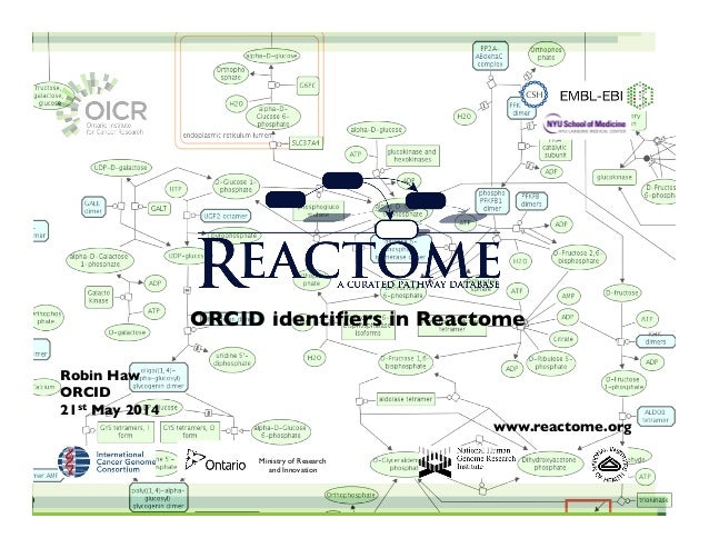 "Robin Haw! ORCID! 21st May 2014 "" "" "" "" "" "" "" www.reactome.org "" ! ! ! ORCID identifiers in Reactome! Ministry of Research ..."