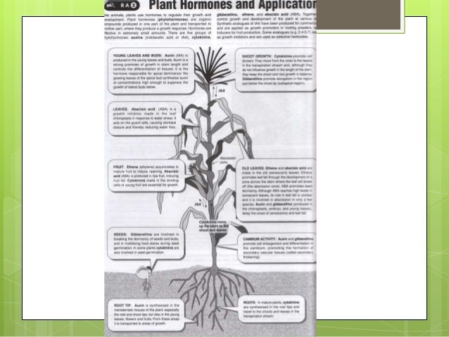 Plant and Animal Responses to the Environment