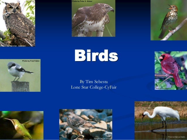 Birds By Tim Sebesta Lone Star College-CyFair