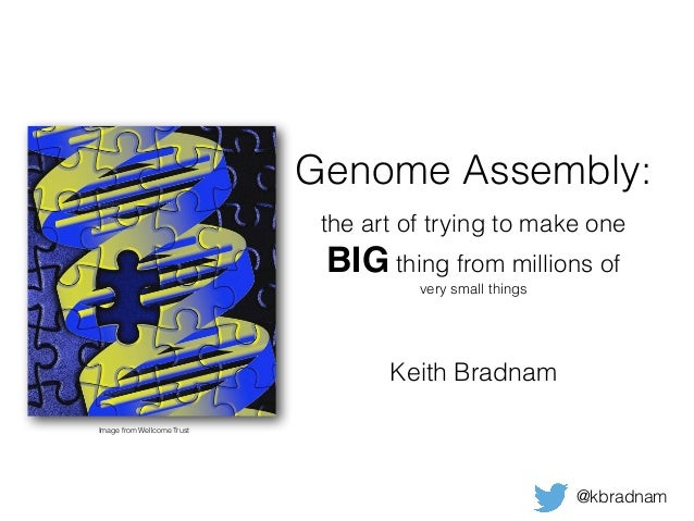 Genome Assembly: the art of trying to make one BIG thing from millions of very small things Keith Bradnam @kbradnam Image ...