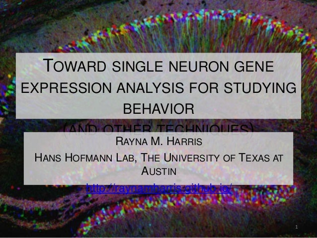 TOWARD SINGLE NEURON GENE EXPRESSION ANALYSIS FOR STUDYING BEHAVIOR (AND OTHER TECHNIQUES) RAYNA M. HARRIS HANS HOFMANN LA...