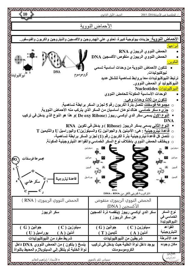 4102 الصف الأول الثانوي 10 / الخلاصة في الأحياء 4102   الأحماض النووية  الأحماض النووية: جزيئات بيولوجية كبيرة، تحتوي علي...