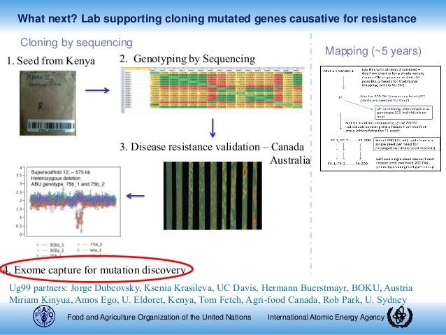 forward and reverse genetics pdf