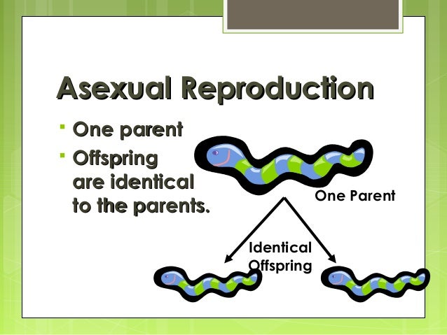asexual reproduction What do this kitten and this bacteria cell have in common the answer: they both  became living organisms through reproduction, which is the process of making.