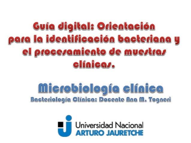 CRITERIOS de CLASIFICACIÓN • La identificación de bacterias puede basarse en muchos caracteres: • Morfología celular • Pre...