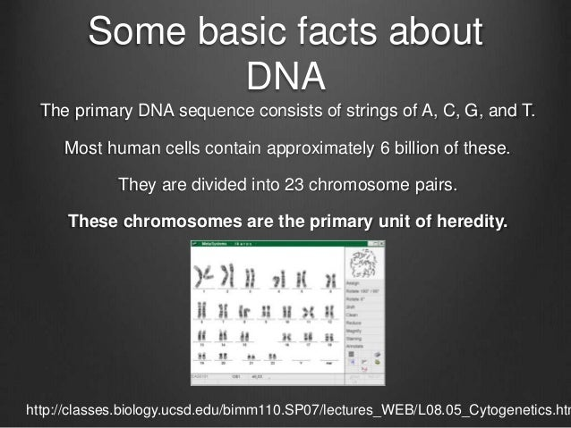 Some basic facts about DNA The primary DNA sequence consists of strings of A, C, G, and T. Most human cells contain approx...