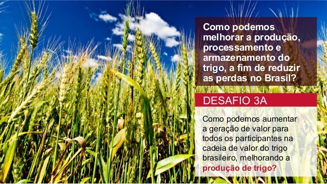 Como podemos melhorar a produção, processamento e armazenamento do trigo, a fim de reduzir as perdas no Brasil? Como podem...