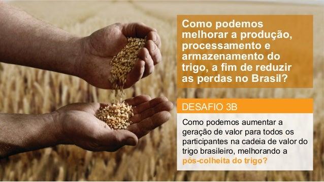 Como podemos melhorar a produção, processamento e armazenamento do trigo, a fim de reduzir as perdas no Brasil? ...