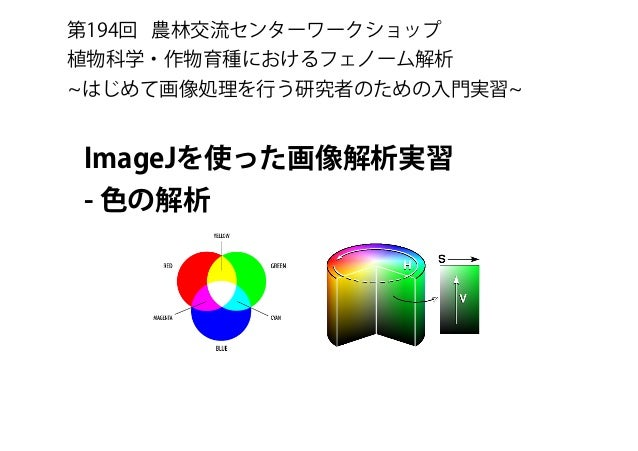 ImageJを使った画像解析実習 - 色の解析 第194回 農林交流センターワークショップ 植物科学・作物育種におけるフェノーム解析 はじめて画像処理を行う研究者のための入門実習