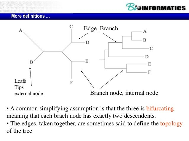 phylogenetic tree in bioinformatics pdf