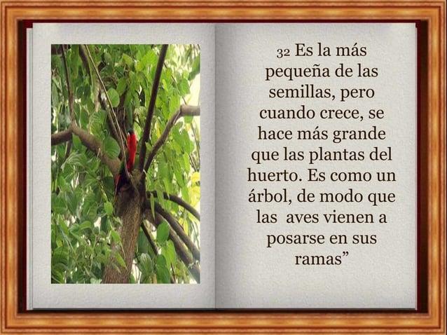 32 Es la más pequeña de las semillas, pero cuando crece, se hace más grande que las plantas del huerto. Es como un árbol, ...