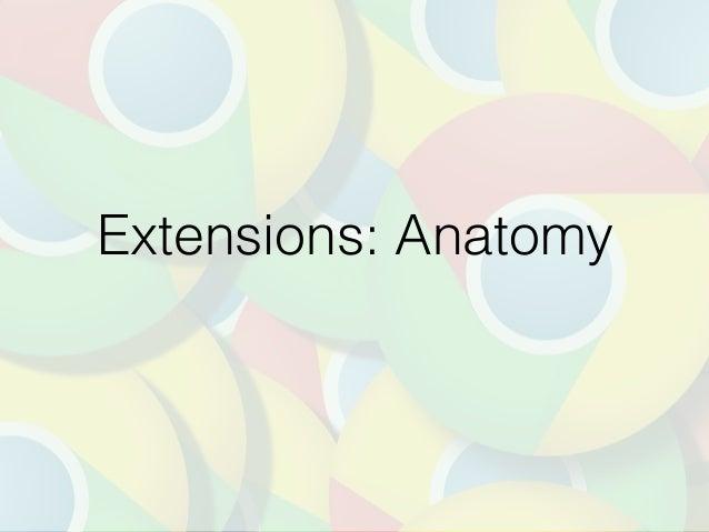 Extensions: Anatomy