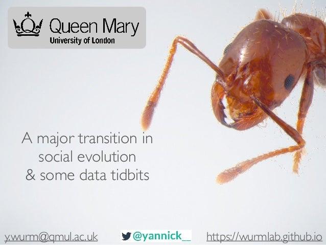 A major transition in social evolution & some data tidbits y.wurm@qmul.ac.uk https://wurmlab.github.io