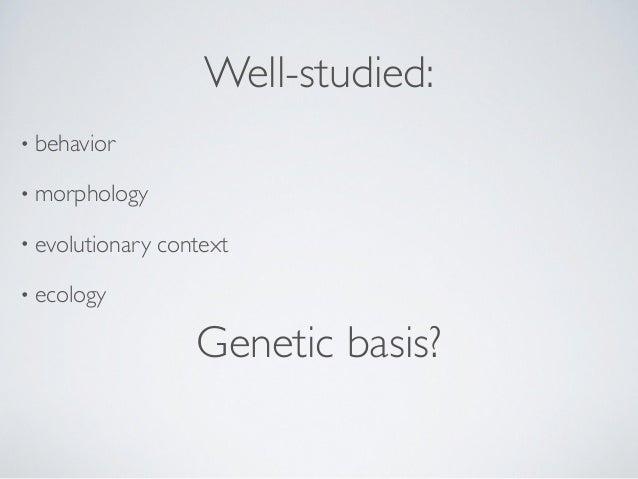 """Fire ants + Population genetics:Allozyme screen Ken Ross """"starch gel""""+ 1 2 3 L. Keller"""