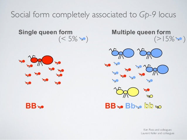 BB BB Bb x x x Ken Ross and colleagues Laurent Keller and colleagues Single queen form Multiple queen form (>15% )(< 5% ) ...