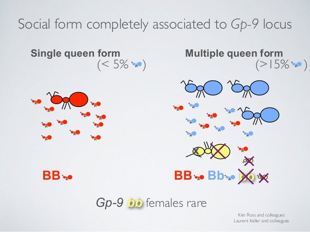 • Is this gene the single überregulator? Social form completely associated to Gp-9 locus